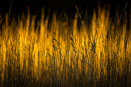 sun field grass yellow gold evening weeds october dusk michigan ottawa sunlit westmichigan 2015 ottawacounty canon60d sigma150500 kevinpovenz