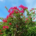亜熱帯植物楽園 - Subtropical plants Yubu island