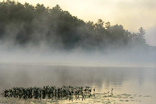 morning mist lake water misty clouds sunrise dawn august chandos 2015 d610 mistymorning chandoslake briandtucker