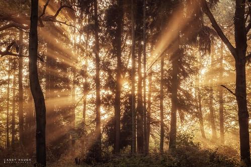 wood morning trees england sunlight sunrise woodland golden unitedkingdom sony gb rays sunrays dorchester crepuscular southoxfordshire a99 sonyalpha andyhough slta99v littlewittenhamwood andyhoughphotography