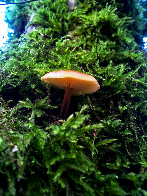 Mushroom and moss