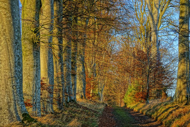 Beech lined track..