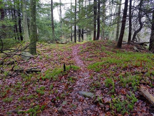 Sawtooth Trail