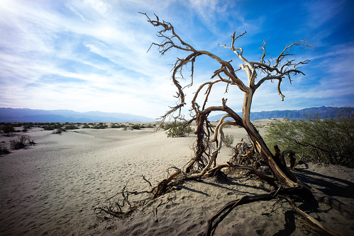 "Image titled ""Mesquite Flat Sand Dunes, Death Valley."""