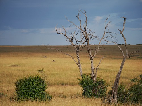 African savannah @ Masai Mara | by Flying Fi5h