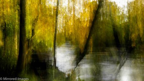 autumn trees light blur colour me movement outdoor richmond multipleexposure layers northyorkshire icm riverswale intentionalcameramovement
