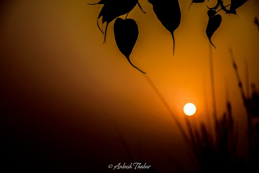 Good Morning Happy New Year To Everyone Ankush Thakur Flickr
