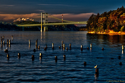 bridge blue trees sunset wild sky usa sunlight white tree green bird water birds clouds outside outdoors daylight washington wings glow sundown northwest outdoor wildlife seagull wing scenic surreal naturallight bluesky calm transportation wa pugetsound cormorant serene tacoma pilings fowl waterfowl washingtonstate hdr goldenhour tacomawashington tacomanarrowsbridge tacomanarrows calmwater titlowbeach calmair goldenhourlight