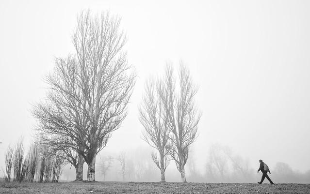Mañana de niebla....