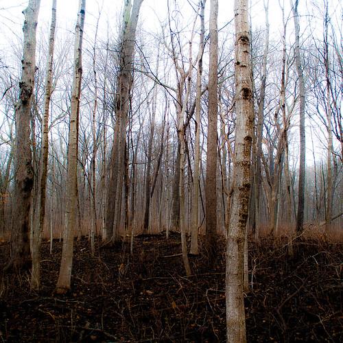captaindanielwrightwoods d5000 nikon fog foggy forest landscape mist misty noahbw quiet spring square still stillness treetrunk trees woods
