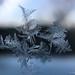Ephemeral beauty of winter by Jürgen Kornstaedt