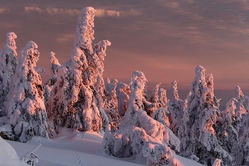 snow schnee sunrise trees canon 6d