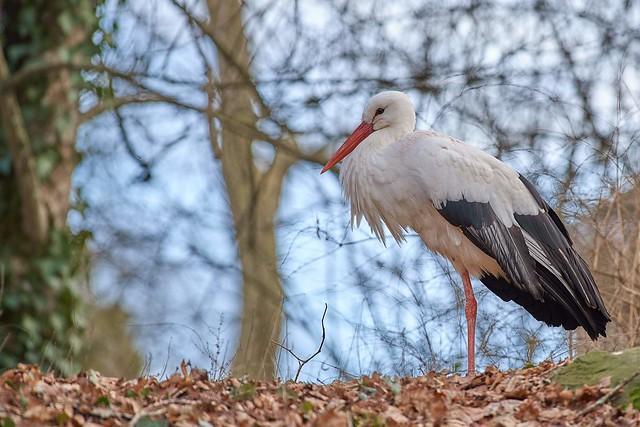 stork & bokeh