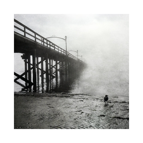 texture beach monochrome fog landscape pier seaside bc seagull whiterock semiahmoobay iphonography