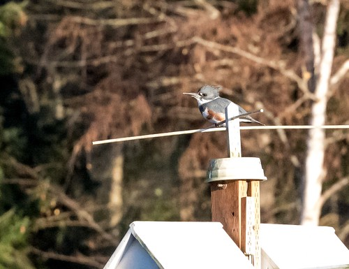 Birdie a la luminance noise. | by peacockshavefeathers