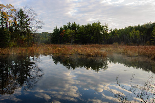 trees sky nature water clouds reflections newengland newhampshire swamp meridennh pennimanroad