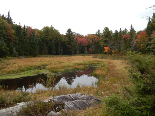 Algonquin PP - Mizzy Lake Trail - 1