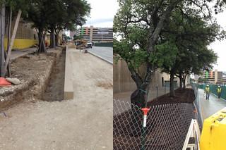 Trees under construction_2