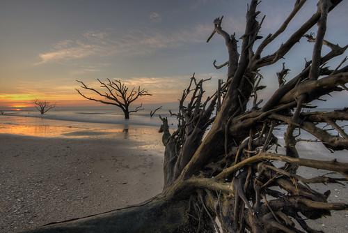travel vacation tree beach nature sunrise nikon roots southcarolina atlantic d750 botanybay atlanticocean hdr edistoisland 1635mm photomatix theboneyard boneyardbeach
