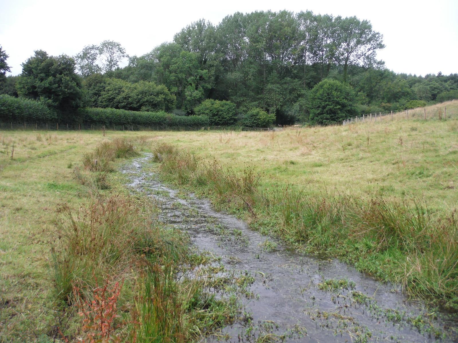 Oddford Brook (II) SWC Walk 248 Tisbury Circular via Hindon