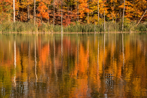 autumn nature reflections pond newyorkstate preserve wny eastaurora sinkingpondsnaturepreserve