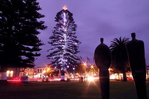 Warrnambool's Christmas tree, a Norfolk Island pine at the edge of the city's Civic Green, November 27, 2015.   by Warrnambool City