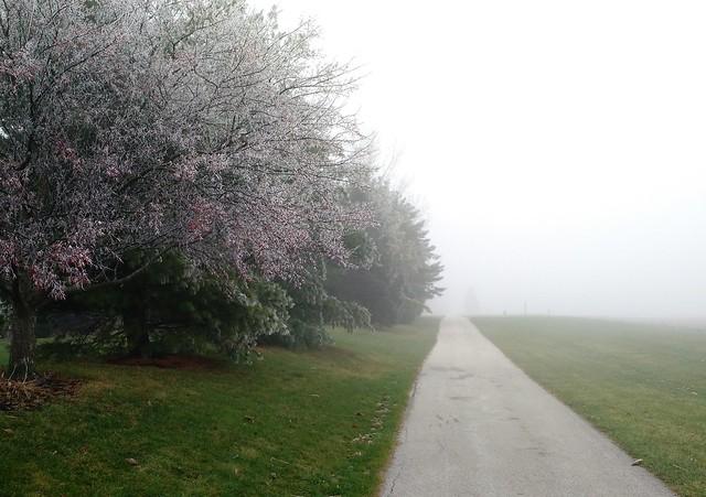Frosty pink