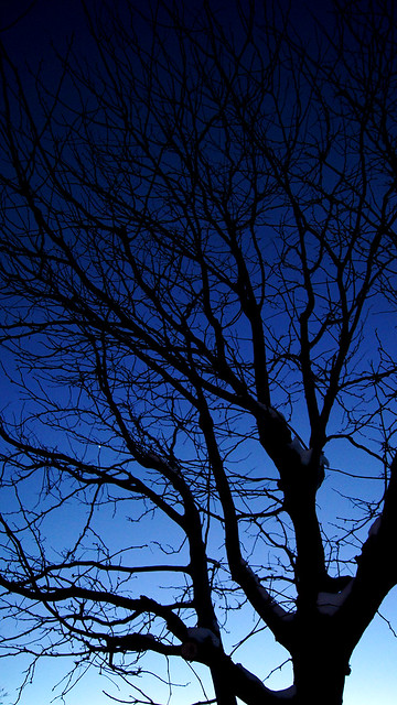 Fading Into Night