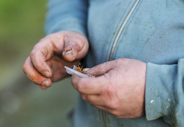 Liando un cigarrillo
