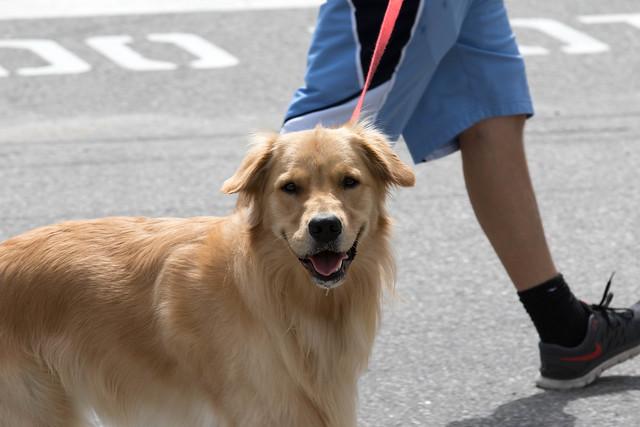 Dog going for walk.jpg