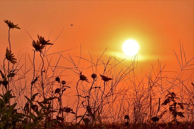 Sun & Flowers