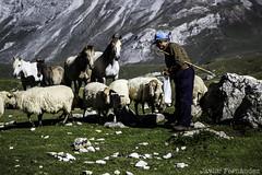 Pastoreando en Picos