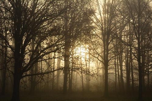 sunrise sun trees fog mist morning fall autumn lockportny niagaracountyny nikond5200 nature landscape