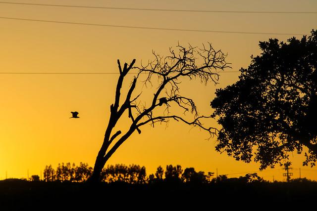 Amanhecer (sunrise/alba)
