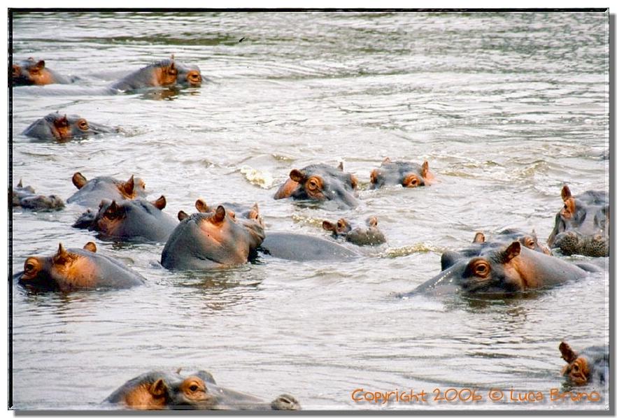 TZ 98 Hippo Pool