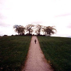 11-woodland   by plindberg