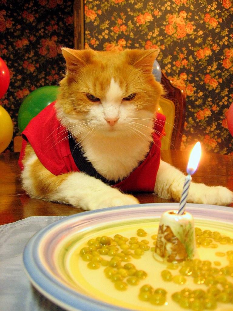 Смешные картинки днем рождения кошка, пожеланием хорошего воскресенья