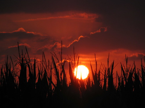 sunset red summer sky orange sun clouds still corn cornfield glow quiet peace silent peaceful indiana calm silence hush stillness glows canonpowershots1is jeremystockwellpix myindianasummer