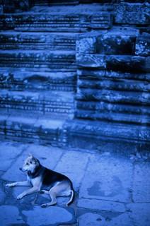 The Angkor Dog | by Chris Van den Broeck