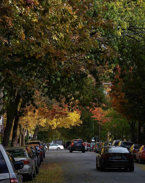 Les couleurs d'automne arrivent en ville