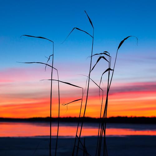 meri luonto landscape auringonlasku jää talvi outdoor iltarusko silhouette taivas afterglow aurinko ice nature sea sky sun sundown sunset winter espoo