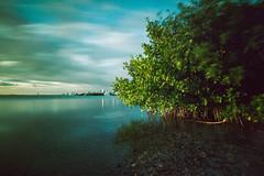 Where the Mangroves meet the City