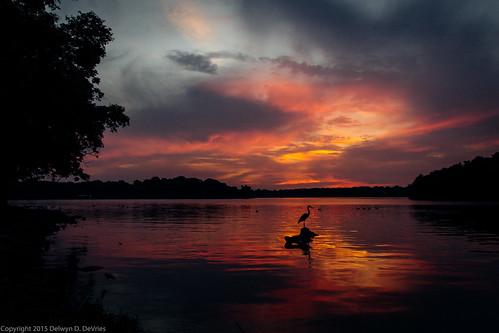 sunset heron us unitedstates tennessee wilsoncounty oldhickorylake shutesbranch