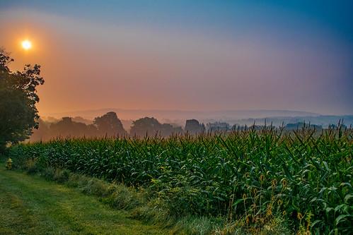 morning summer sun fog sunrise corn warm day farm foggy rise humid