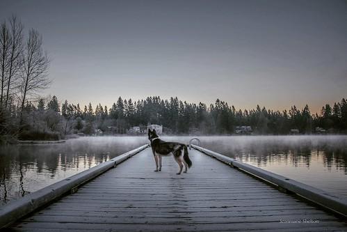 nikond810 nature sky sunrise landscape lake dog jeanmarie jeanmarieshelton
