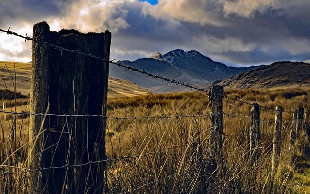 Stock fenced Snowdon
