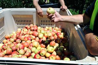 IMG_0438 | by Apple and Pear Australia Ltd
