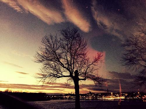 twilight crepuscule crepusculo city ville citta ciudad stadt tree arbre arbol baum