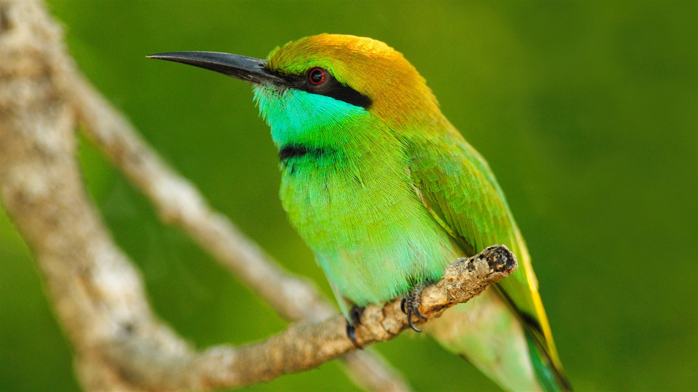 Beautiful Green Bird Wallpaper