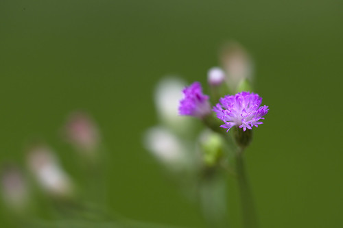 A tiny flower | by Takashi(aes256)
